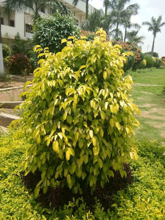 liść zielona roślina obrazy stock