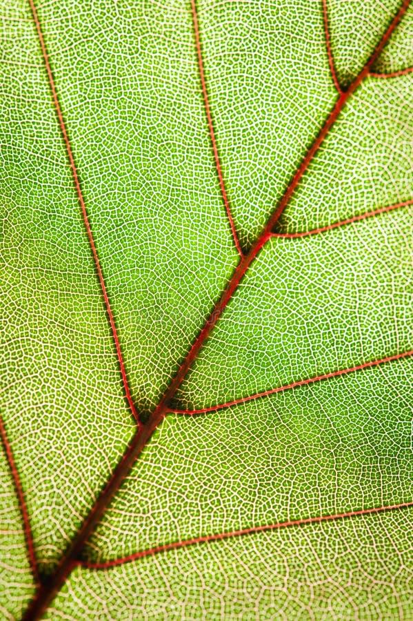 liść zielona tekstura zdjęcia stock