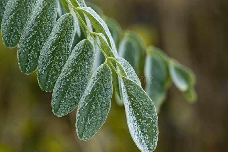 liść zielona zima zdjęcie royalty free
