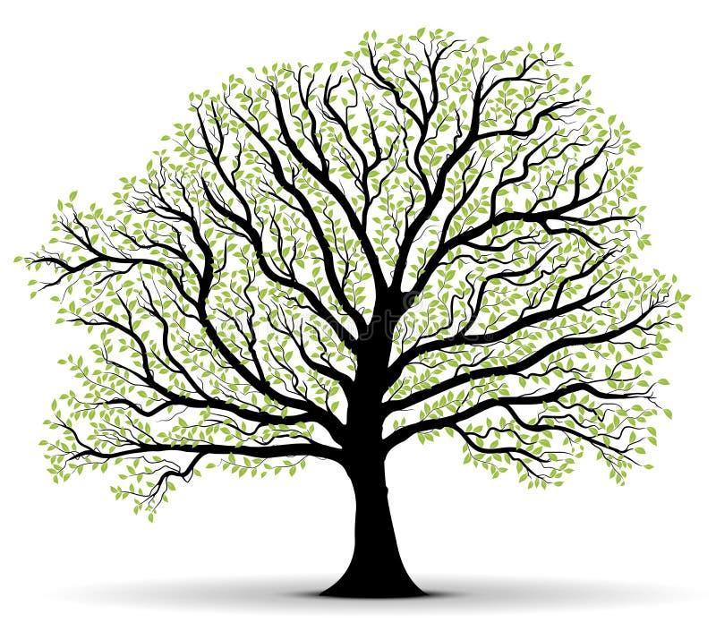 Liść zielony wektorowy drzewny udział, kontur ilustracja wektor