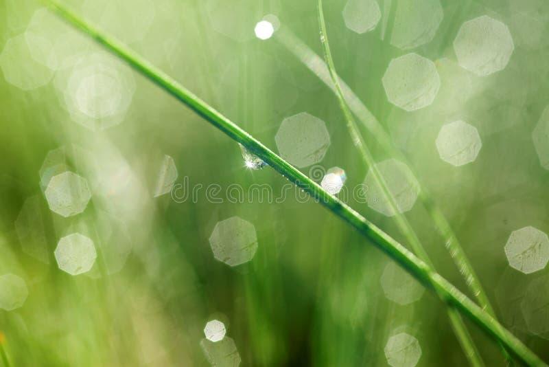 liść zrzutu wody. fotografia stock