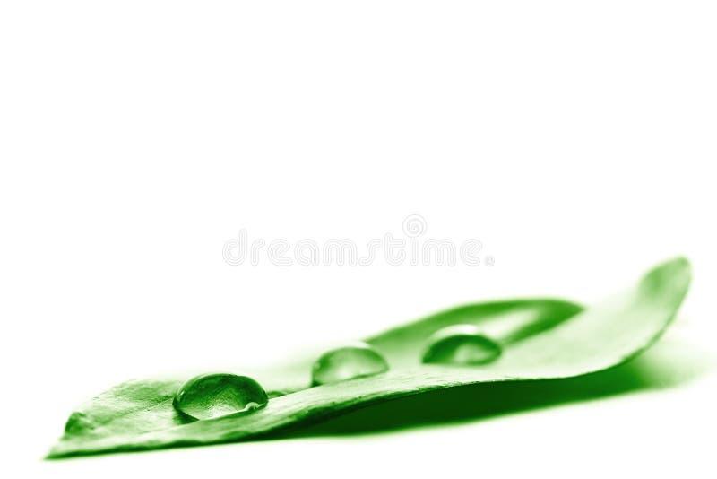 liść zrzutu wody. zdjęcia stock