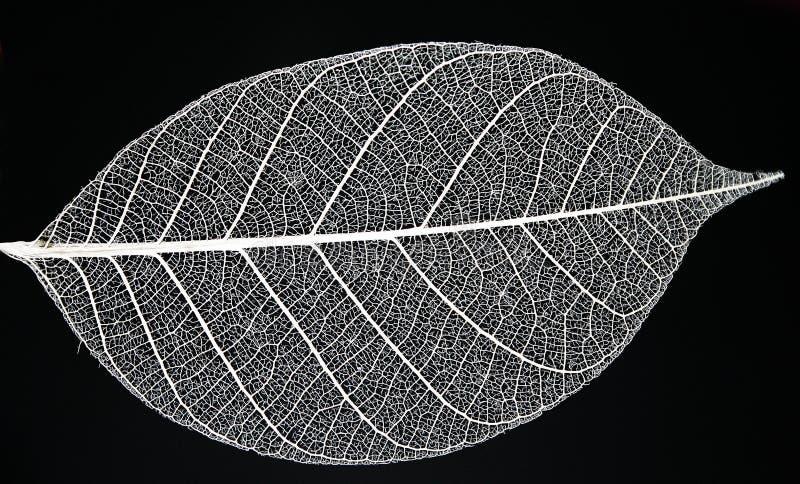 liści. zdjęcie royalty free