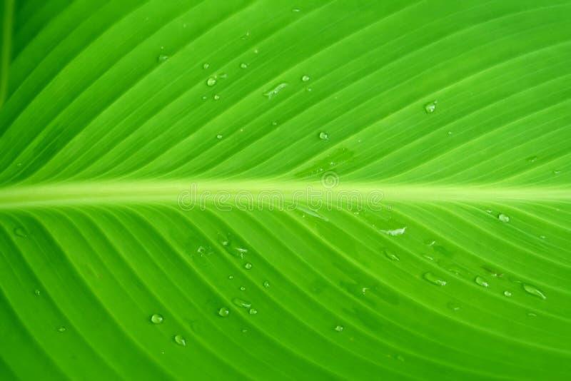 liści zdjęcie stock