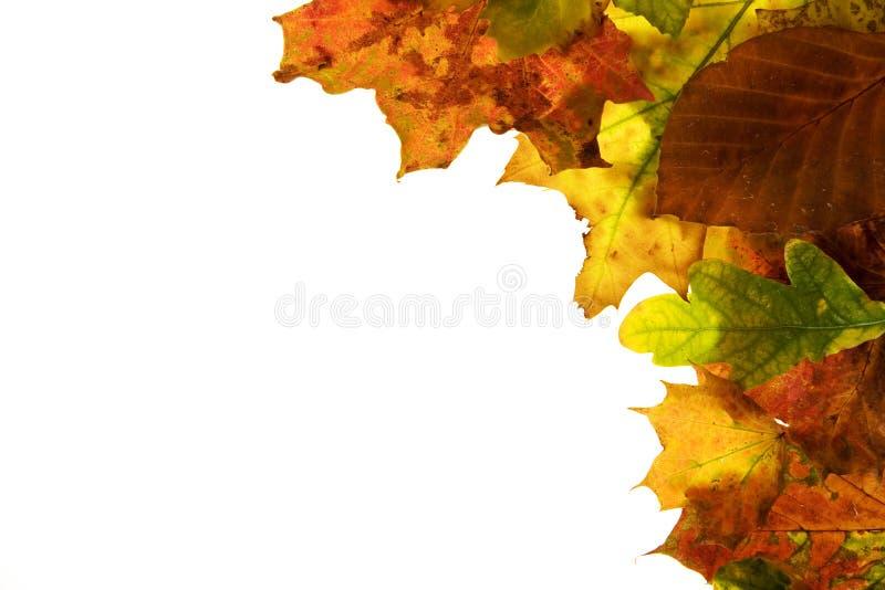 liści jesienią zdjęcia stock