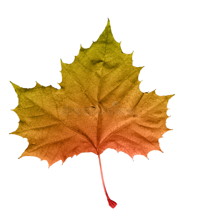 liści jesienią obraz stock