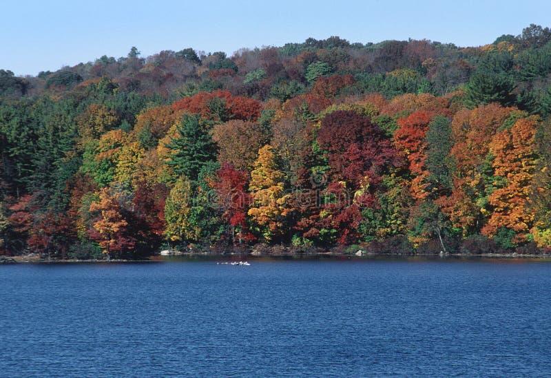 Download Liści jesienią drzewa zdjęcie stock. Obraz złożonej z tło - 131670