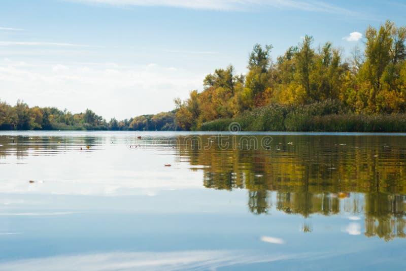 liści jesienią tła wody obrazy royalty free
