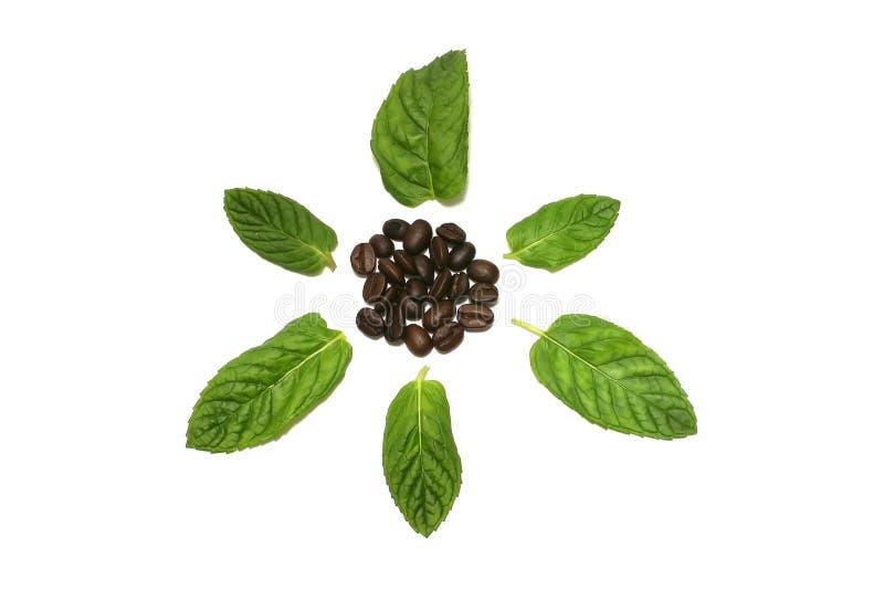 liści kawowi nasion obraz royalty free