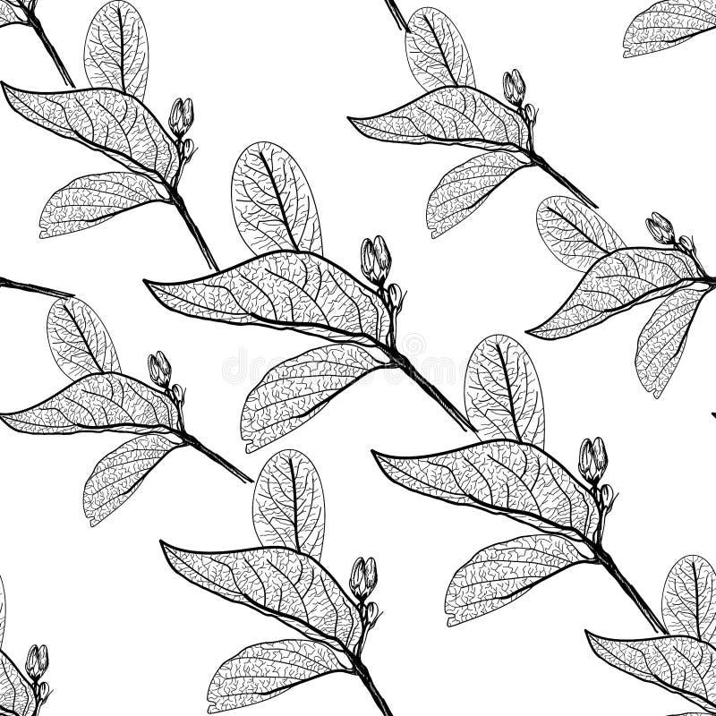 Liści kontury na białym tle kwiecisty bezszwowy wzór, pociągany ręcznie wektor royalty ilustracja