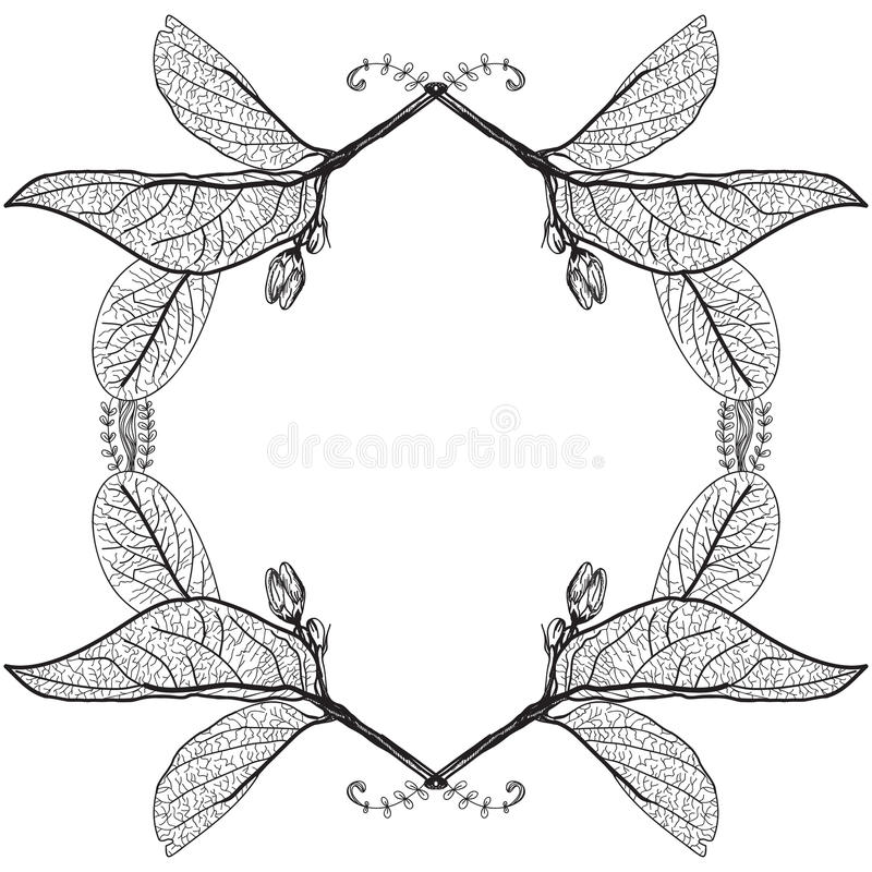 Liści kontury na białym tle rabatowy kwiecisty Nakreślenie fra ilustracja wektor