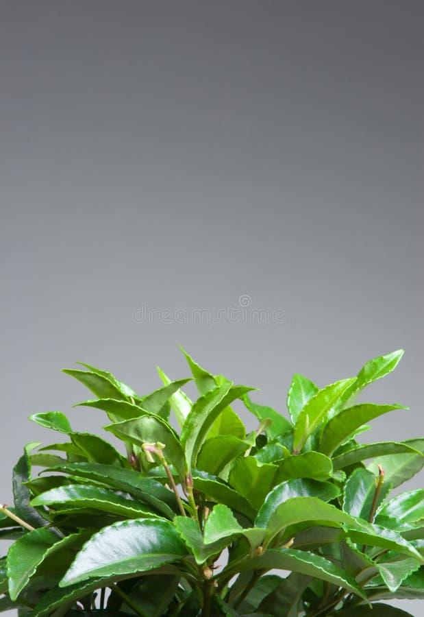 liści roślinnych domów fotografia stock