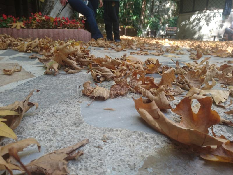 Liścia cmentarz obraz stock