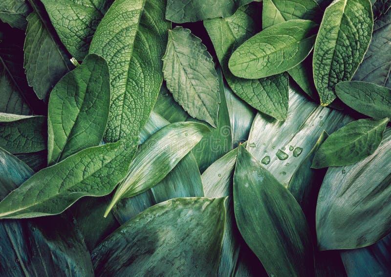 Liścia liścia tekstury zieleni organicznie tła układu makro- zbliżenie tonujący zdjęcie royalty free