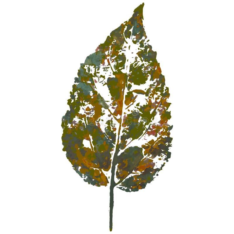 Liścia odcisk, szkotowy druk fotografia stock
