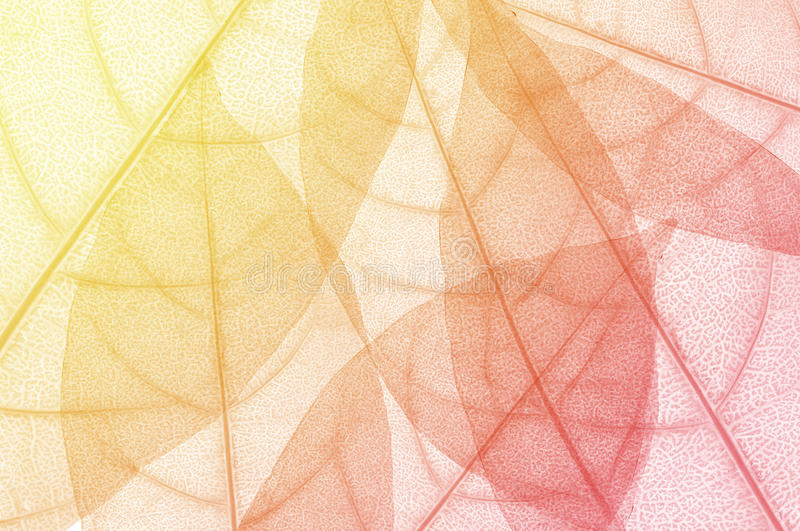 liścia projekta abstrakta tło royalty ilustracja