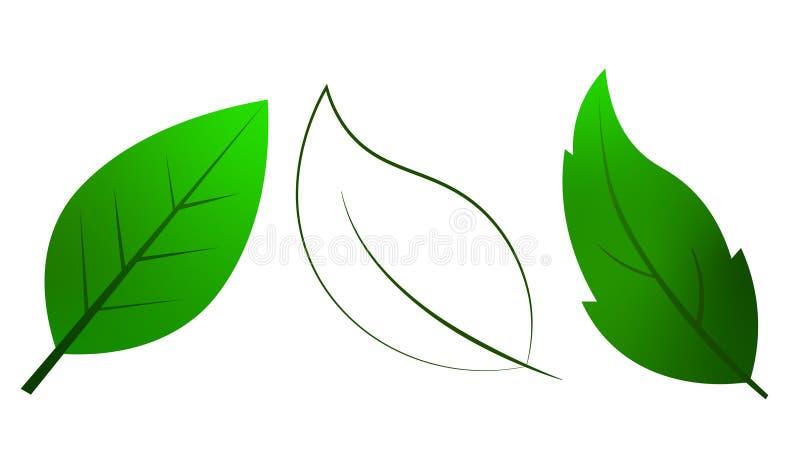 Liścia wektor z zielonym colour i przejrzystym kolorem fotografia stock