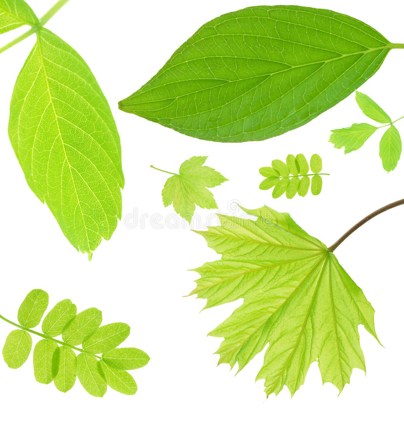 liście obrazy stock