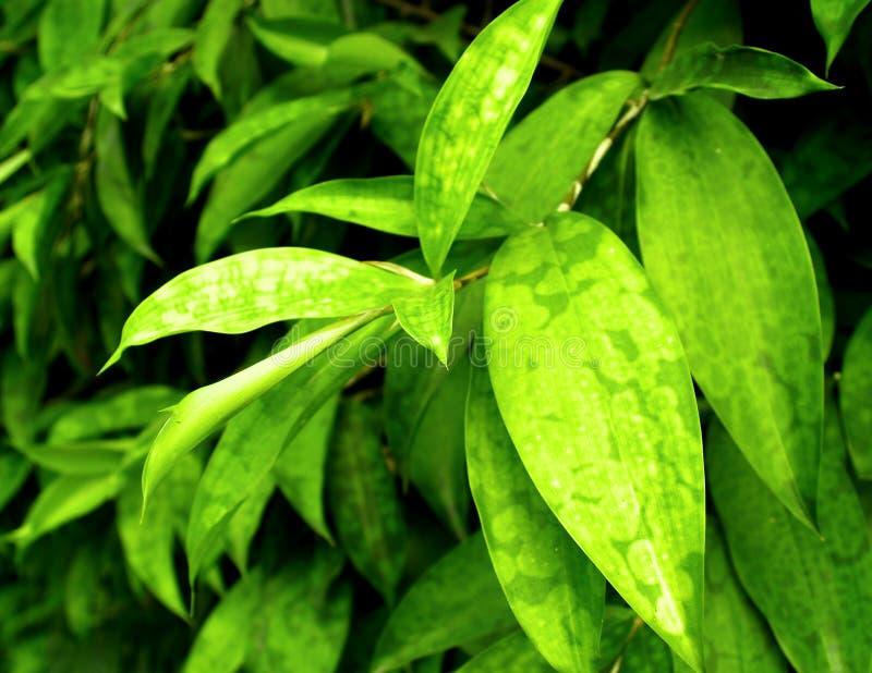liście zdjęcia stock