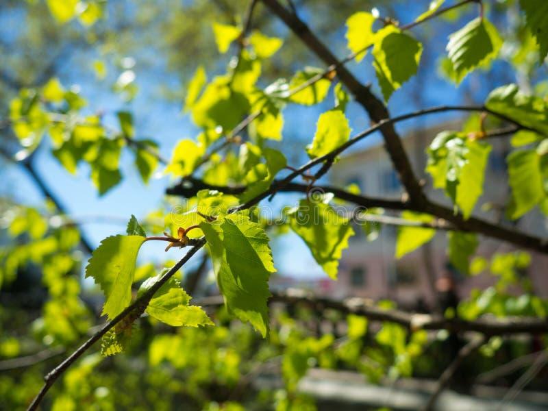 liście zdjęcie stock