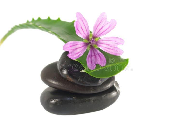 Liście aloes czarownicy kamienie i kwiat obraz stock