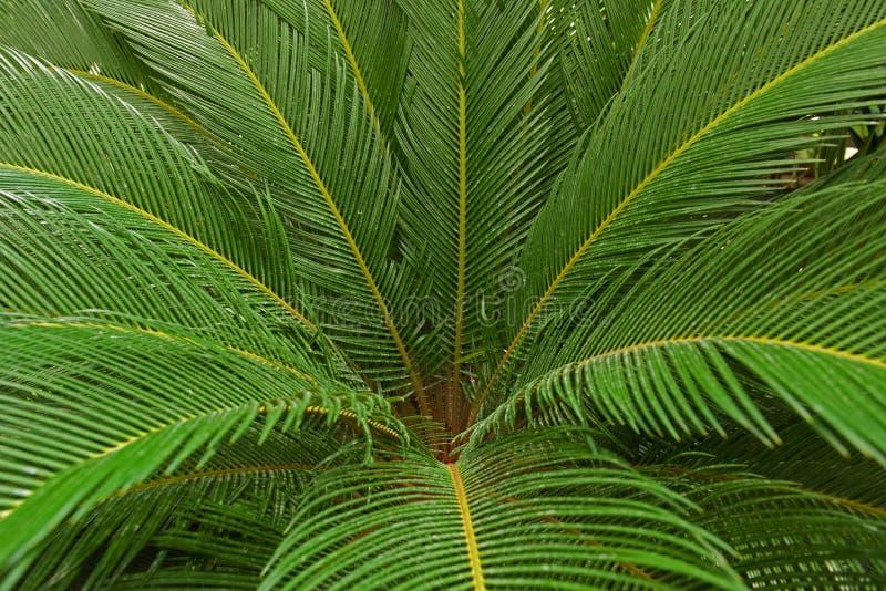 Liście drzewko palmowe zdjęcia royalty free