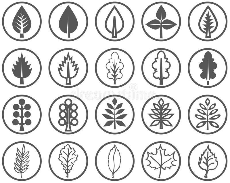 Liście drzewo ilustracji