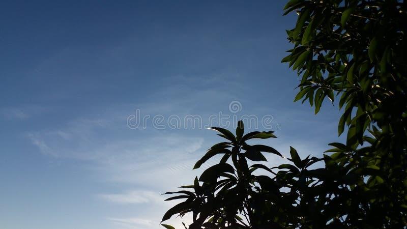Liście drzewo pod niebo widokiem zdjęcia royalty free