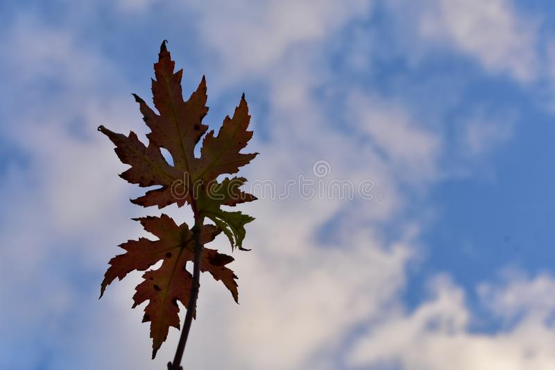 Liście i chmury fotografia stock
