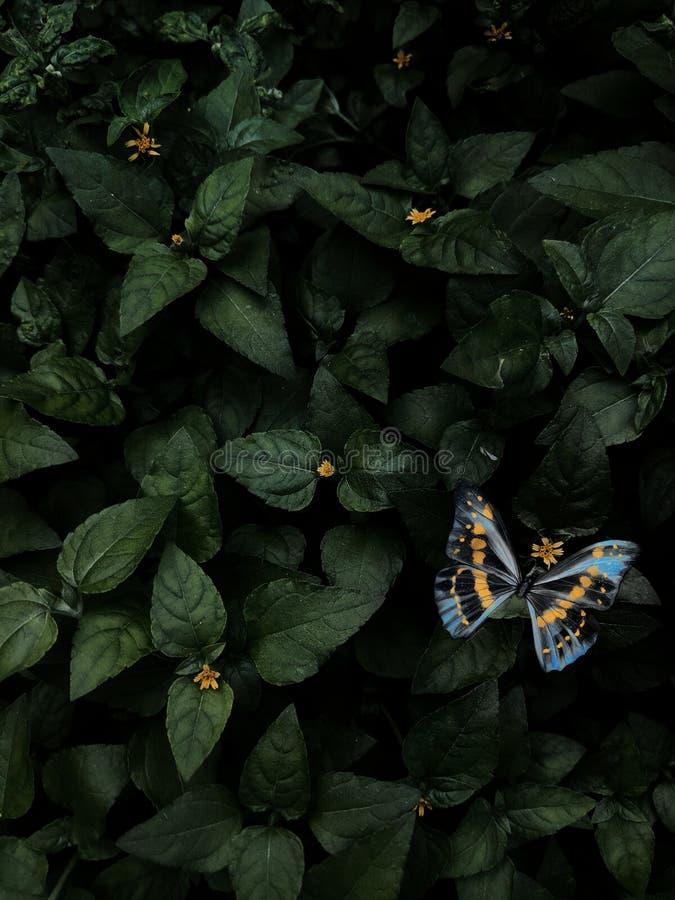 Liście i niebieski motyl i żółte małe kwiaty moody zdjęcia royalty free