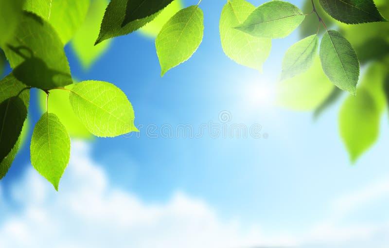 Liście i pogodny niebo zdjęcia stock