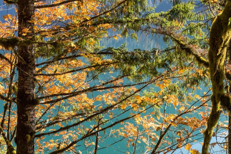 Liście i zielony mech który r na bagażniku drzewa w Północnych siklawach obok wody Piekarniany jezioro obrazy stock
