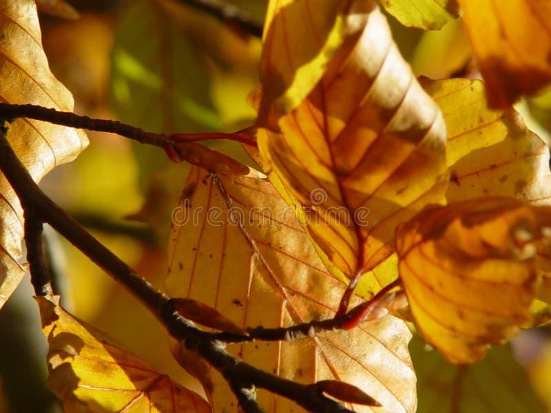 Download Liście jesienią zdjęcie stock. Obraz złożonej z spadać, gałąź - 25922
