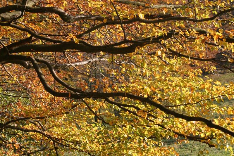 liście jesienią obrazy royalty free