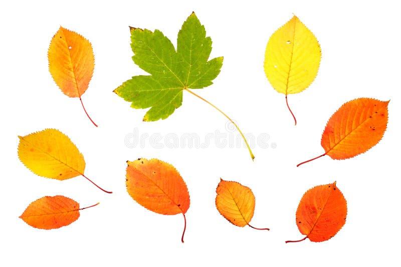liście jesienią kolekcji zdjęcie stock