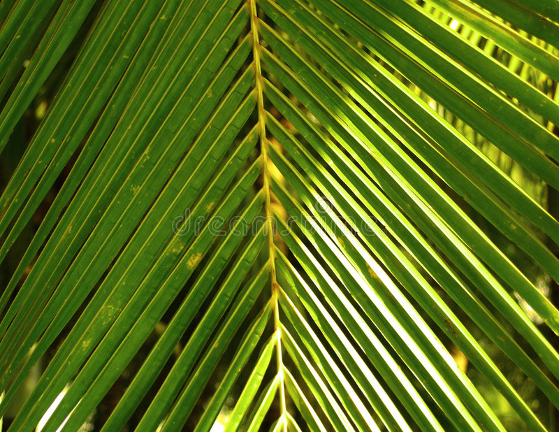 liście kokosowe fotografia stock