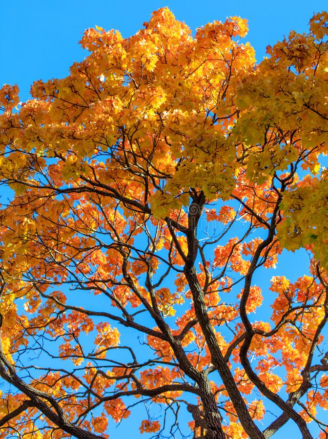 Liście na drzewie w spadku w parku zdjęcie stock