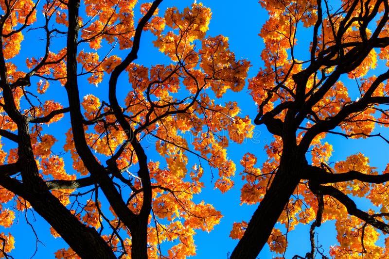 Liście na drzewie w spadku w parku fotografia royalty free