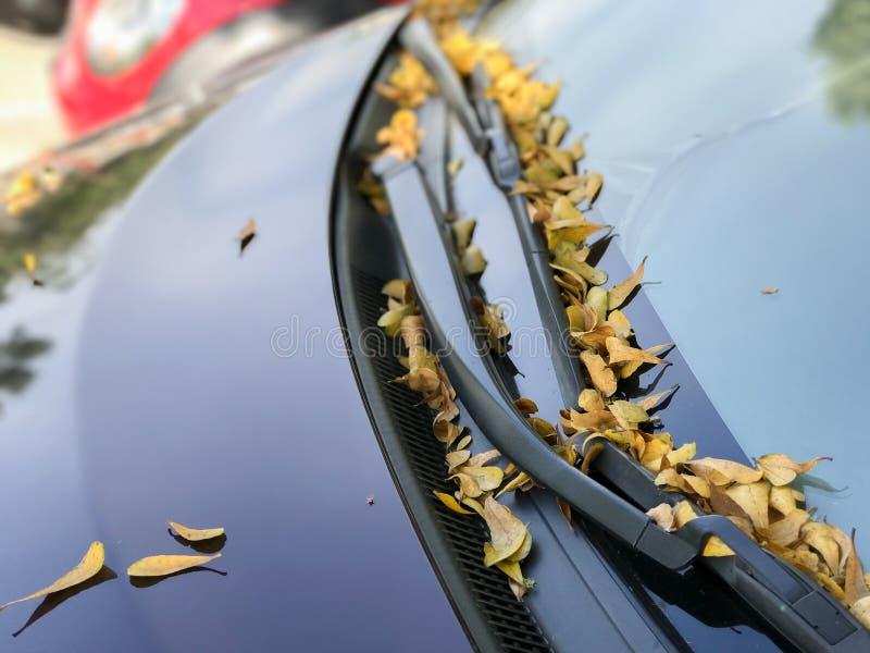 Liście na samochodowym cowl obraz royalty free