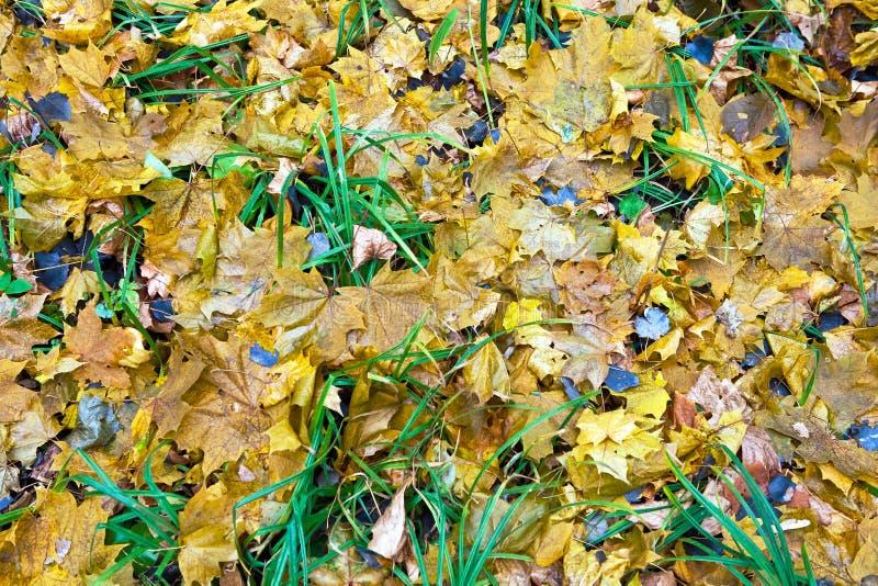 Liście na trawie obrazy stock