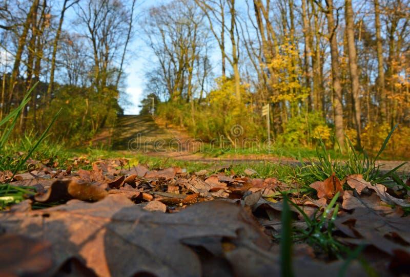 Liście na ziemi park - dżdżownicy ` s oka widok horyzontalny zdjęcie stock