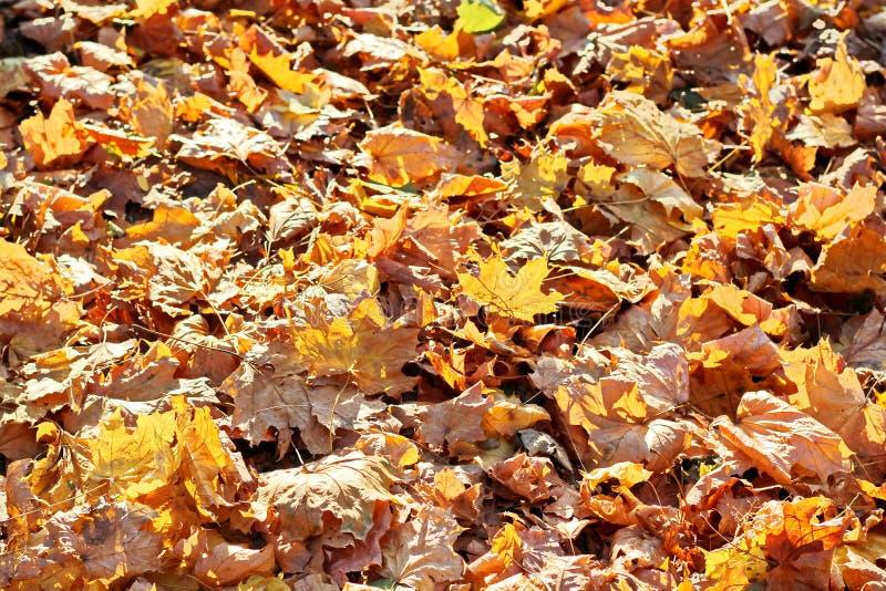 Liście na ziemi w jesieni jako tło zdjęcie stock
