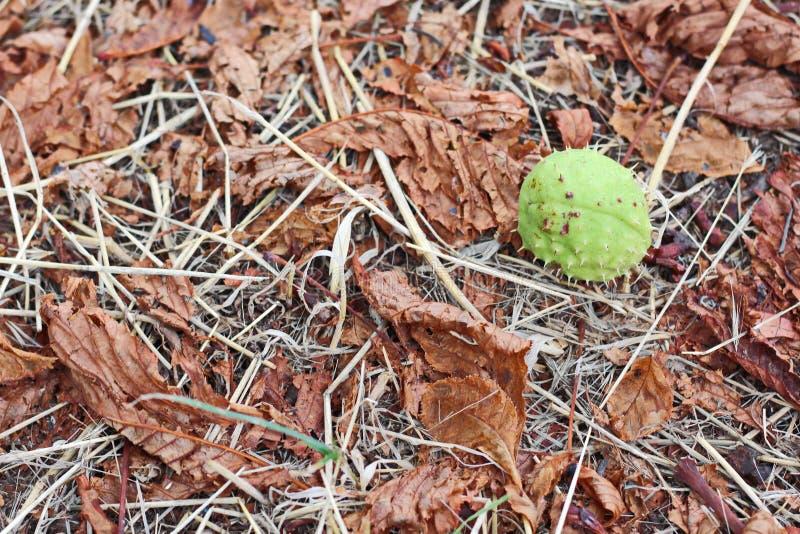 Liście na ziemi w jesieni jako tło obraz stock