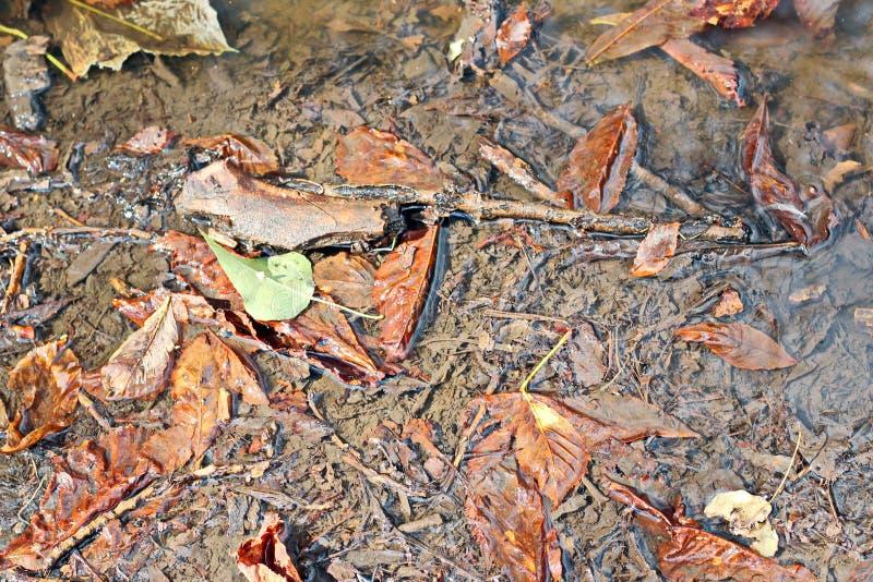Liście na ziemi w jesieni jako tło zdjęcie royalty free
