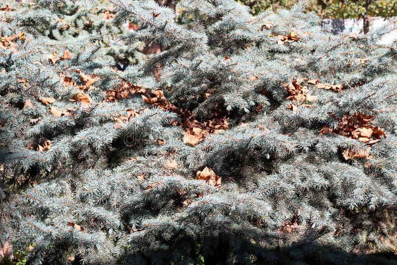 Liście na ziemi w jesieni jako tło fotografia royalty free