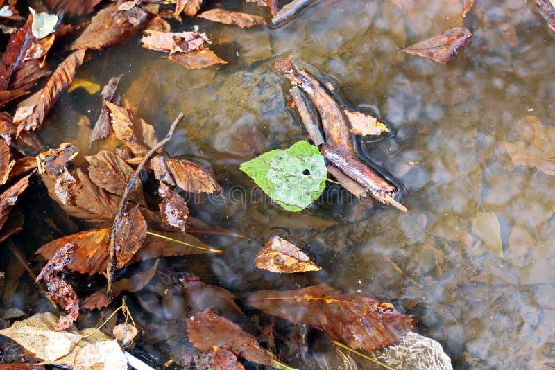 Liście na ziemi w jesieni jako tło zdjęcia royalty free