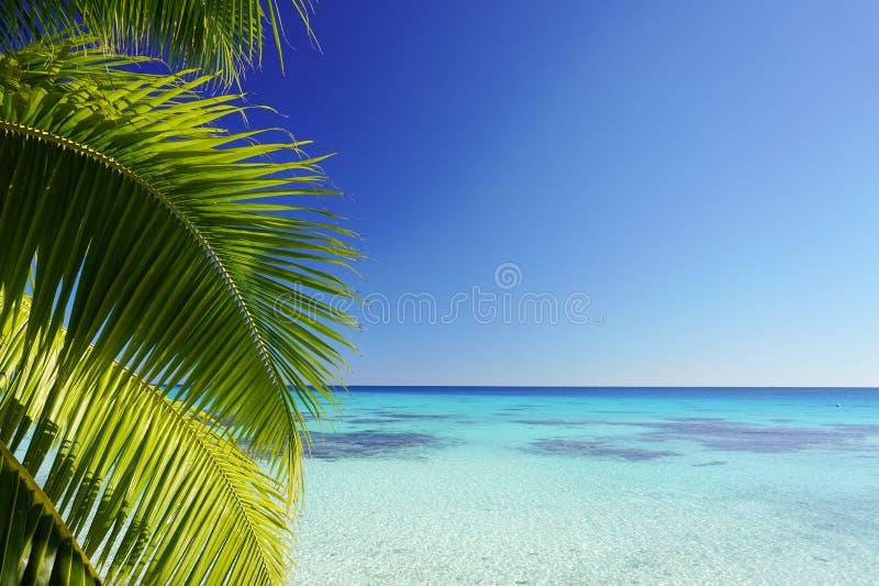 Liście palmowego drzewa, turkusowa laguna, otoczona jasnoniebieskim niebem z kopią zdjęcie stock
