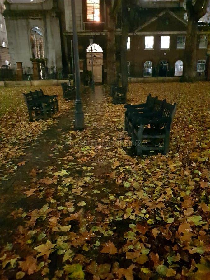 Liście rozrzucone przez ten mokry londyński park podwórkowy Grey Friars obraz stock