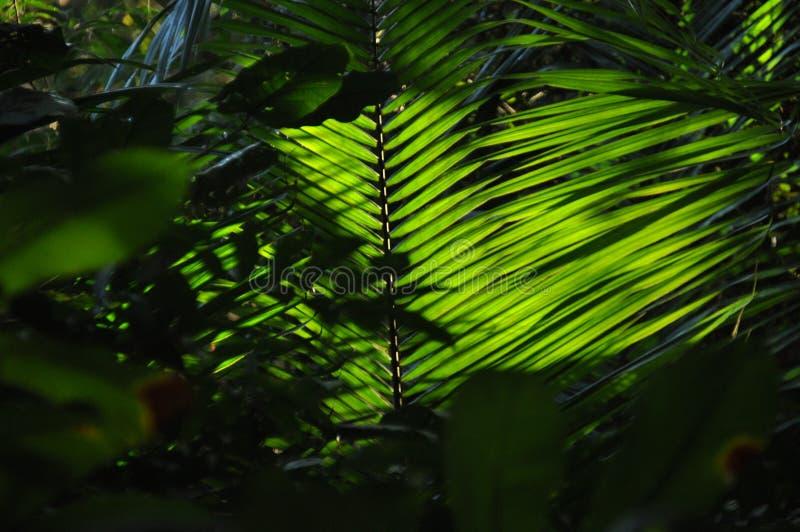 Liście tropikalne rośliny, palmy w świetle słonecznym przy dnem las w dżungli zdjęcie stock
