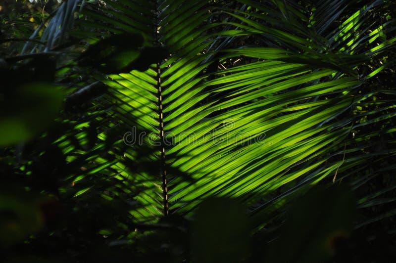 Liście tropikalne rośliny, palmy w świetle słonecznym przy dnem las w dżungli obrazy stock
